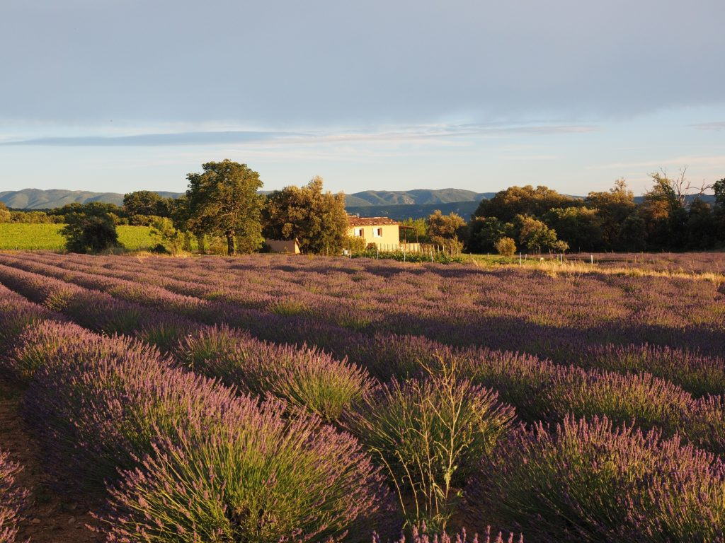 Provence in Detail